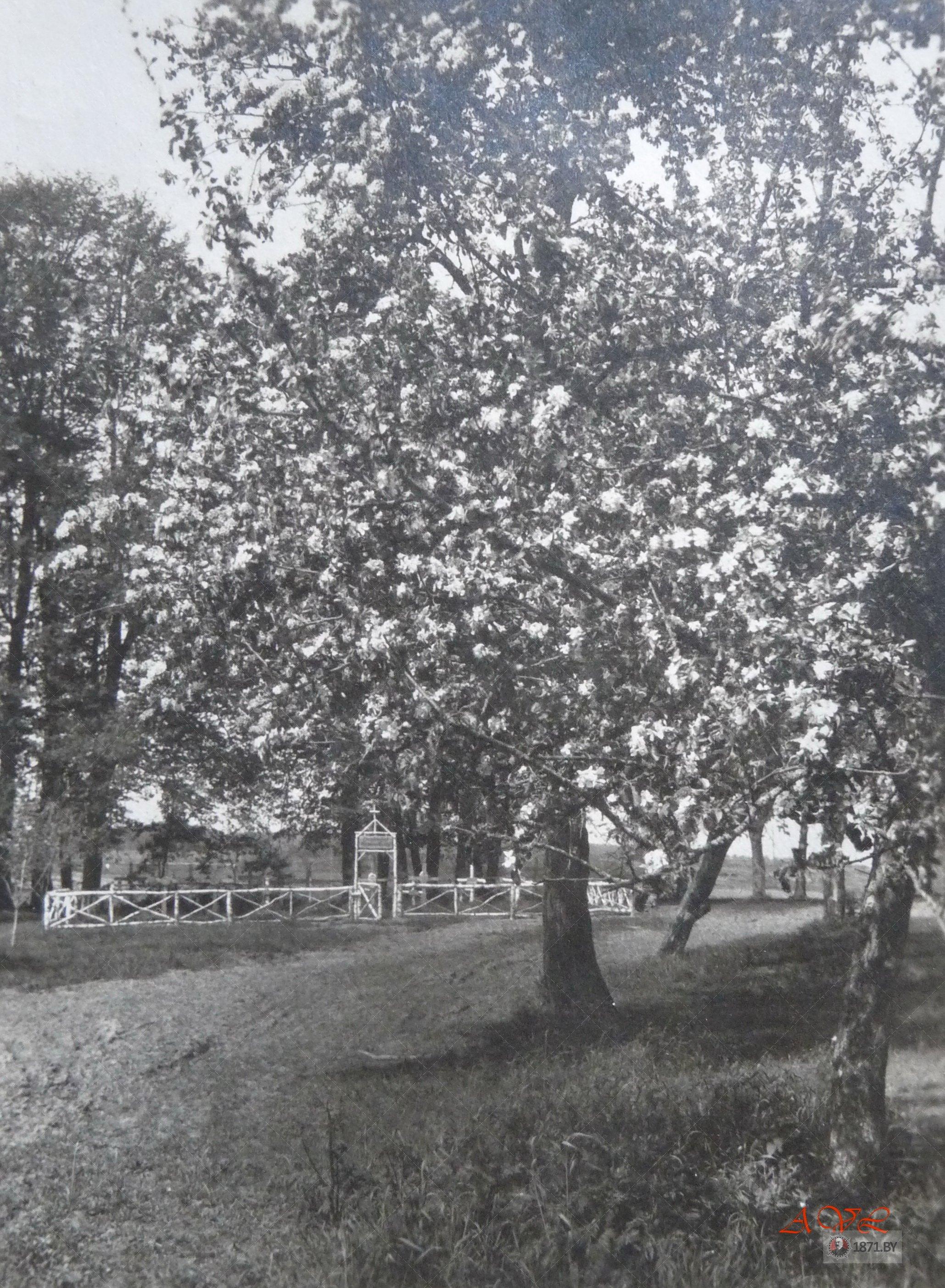 Фото немецкого кладбища в районе деревни Михновщина