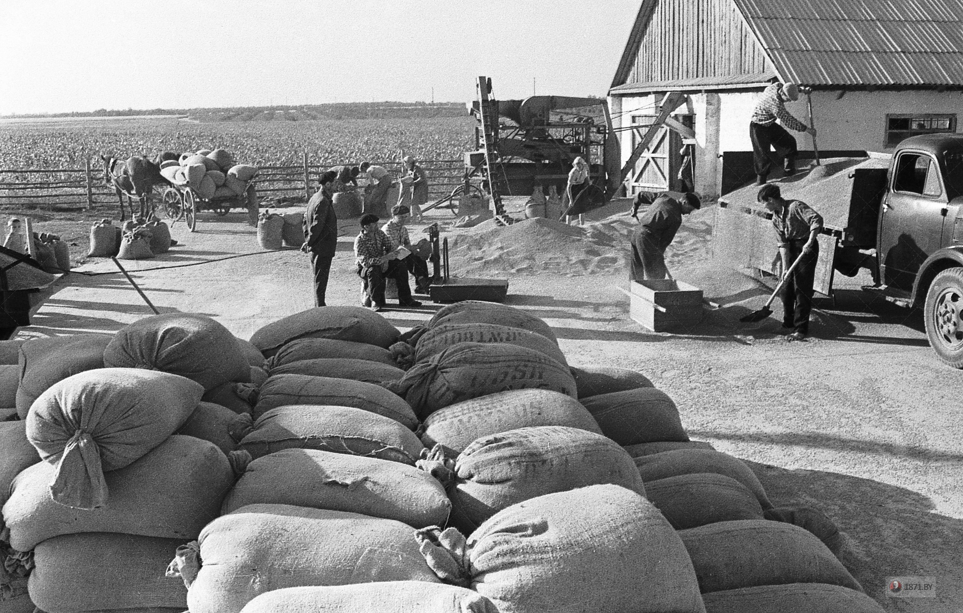 04. 1965 год. На зернотоку Залюбичской бригады принимают с поля богатый урожай.